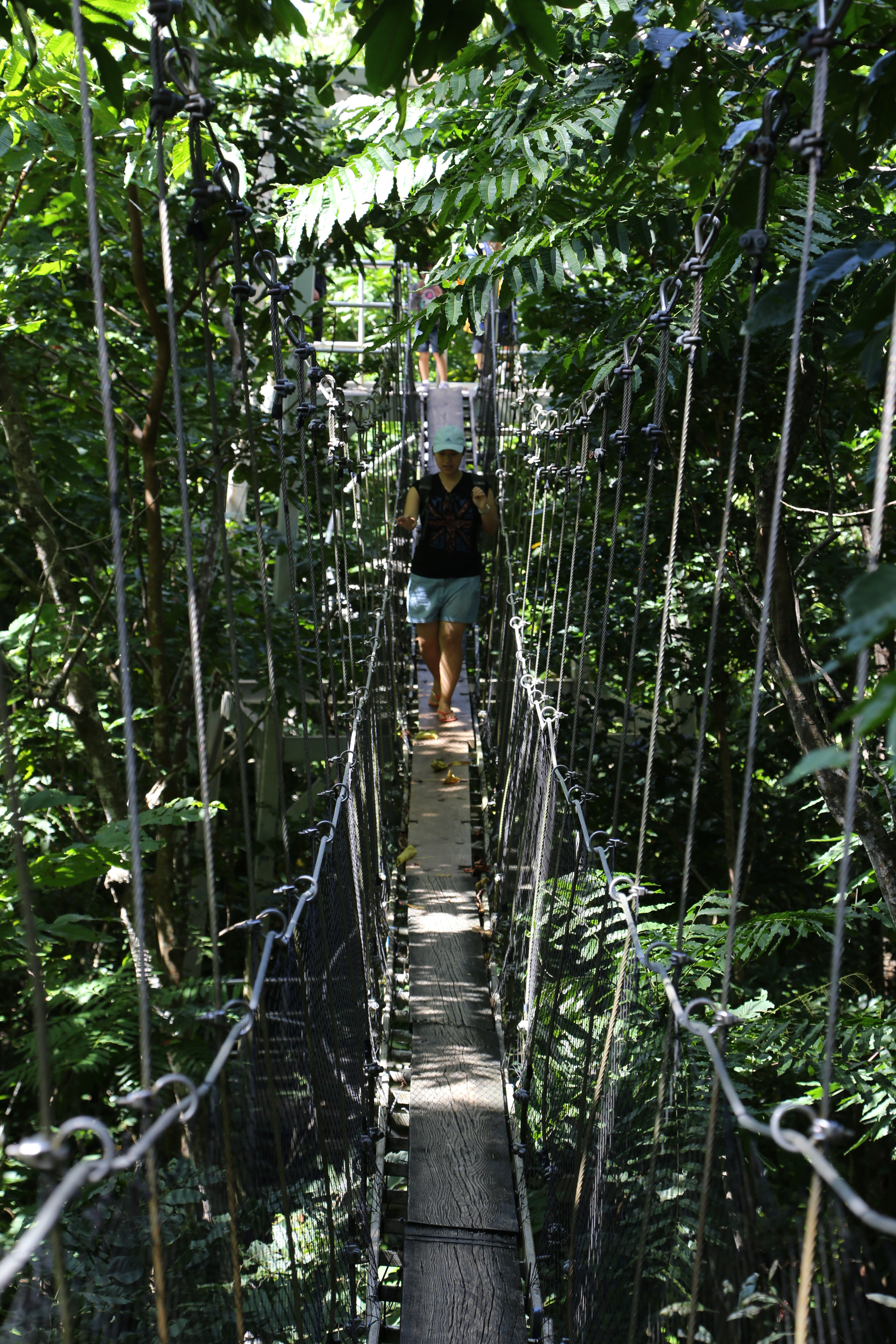 ... canopy walk which resized_IMG_1963_ed & Only in Samoa - Around the World 2015Around the World 2015
